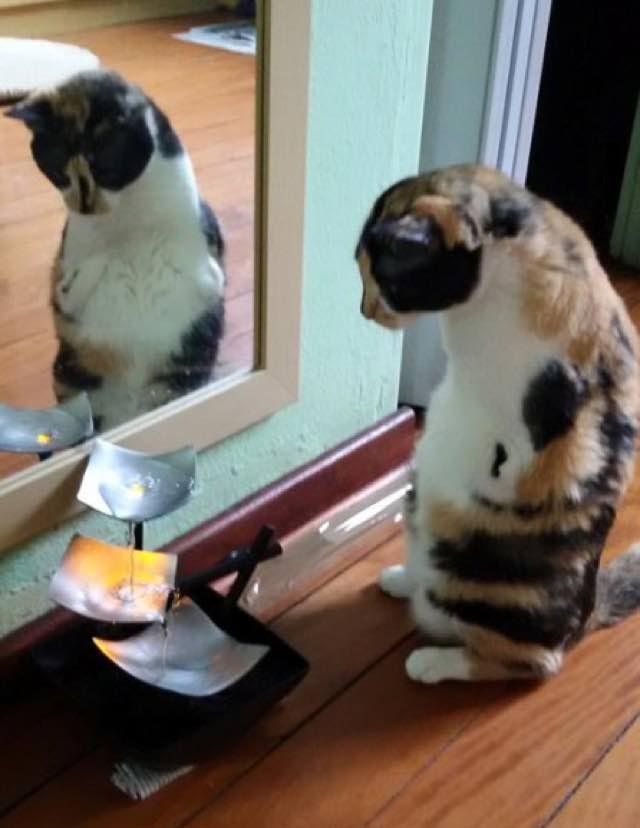 wpid wp 1455736172500 - Terlahir Cacat dengan 2 Kaki, Kucing ini Tetap Semangat Jalani Kehidupannya