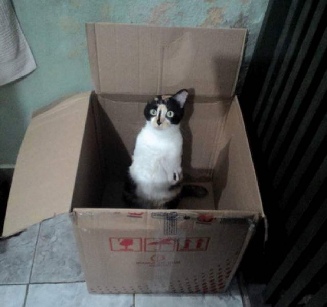 wpid wp 1455736180061 - Terlahir Cacat dengan 2 Kaki, Kucing ini Tetap Semangat Jalani Kehidupannya