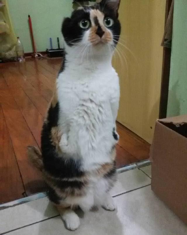 wpid wp 1455736228352 - Terlahir Cacat dengan 2 Kaki, Kucing ini Tetap Semangat Jalani Kehidupannya