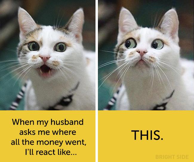 wpid wp 1458418789513 - Siapa Bilang Kucing Tidak Bisa Berekspresi seperti Manusia