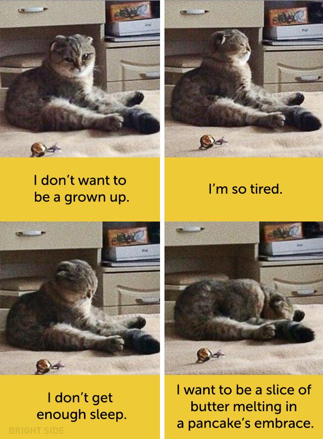 wpid wp 1458418797367 - Siapa Bilang Kucing Tidak Bisa Berekspresi seperti Manusia