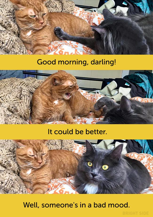 wpid wp 1458418815309 - Siapa Bilang Kucing Tidak Bisa Berekspresi seperti Manusia