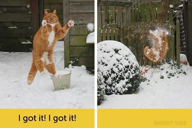 wpid wp 1458418823264 - Siapa Bilang Kucing Tidak Bisa Berekspresi seperti Manusia