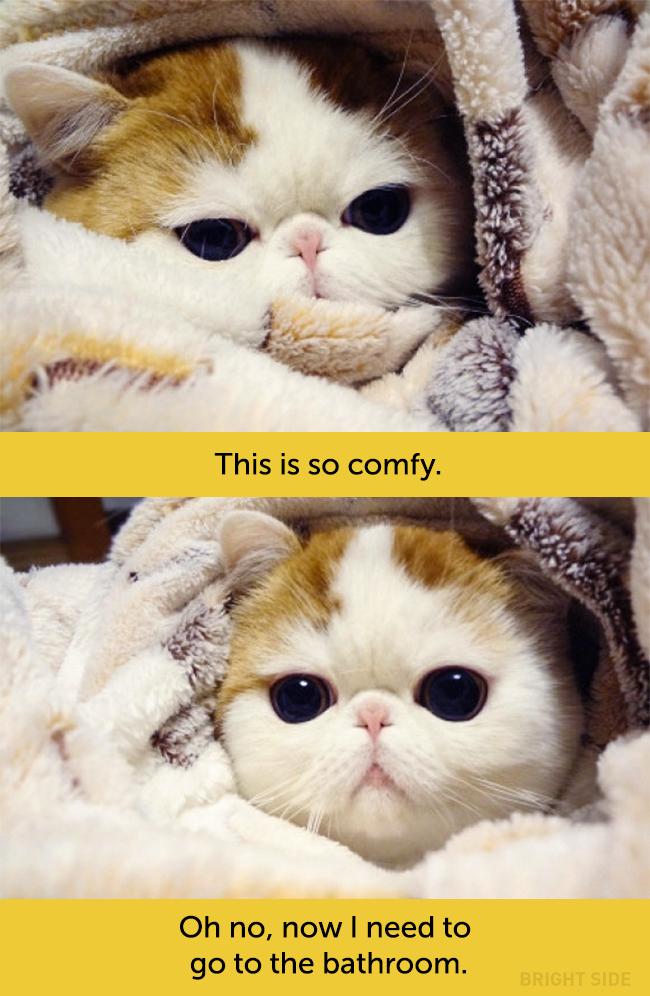 wpid wp 1458418913217 - Siapa Bilang Kucing Tidak Bisa Berekspresi seperti Manusia