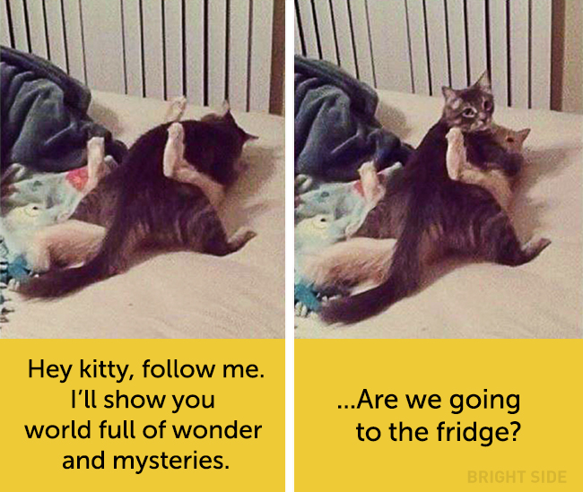 wpid wp 1458418921718 - Siapa Bilang Kucing Tidak Bisa Berekspresi seperti Manusia