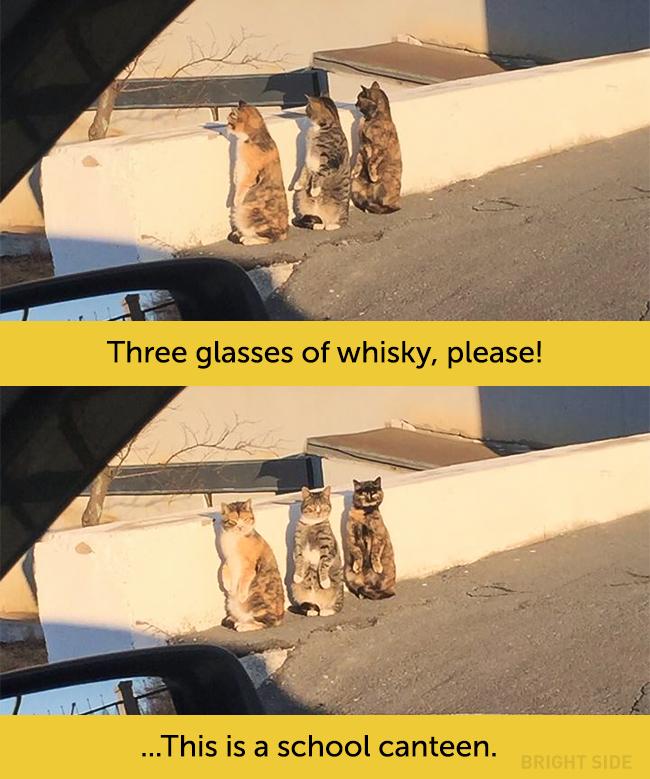wpid wp 1458418938616 - Siapa Bilang Kucing Tidak Bisa Berekspresi seperti Manusia
