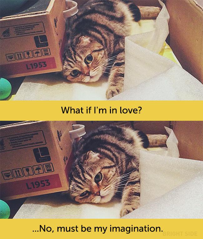 wpid wp 1458419073209 - Siapa Bilang Kucing Tidak Bisa Berekspresi seperti Manusia