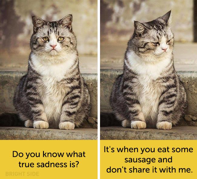 wpid wp 1458419083381 - Siapa Bilang Kucing Tidak Bisa Berekspresi seperti Manusia