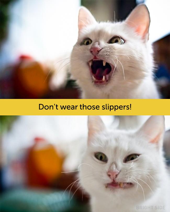 wpid wp 1458419192882 - Siapa Bilang Kucing Tidak Bisa Berekspresi seperti Manusia