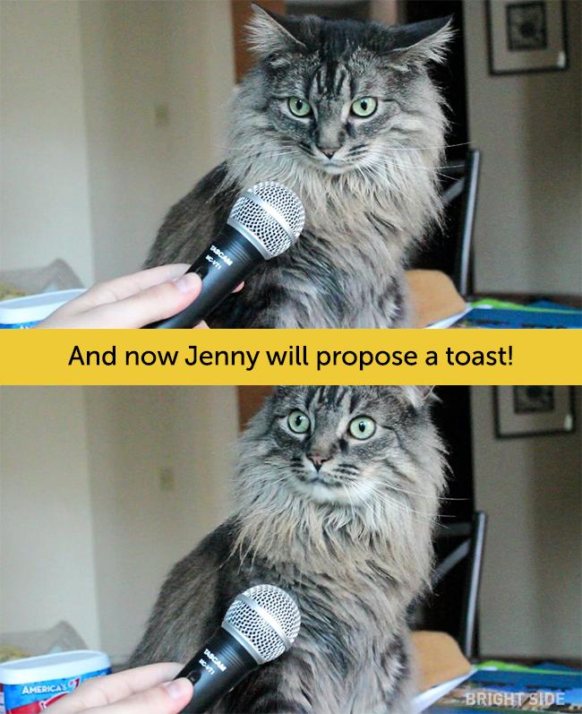 wpid wp 1458419202176 - Siapa Bilang Kucing Tidak Bisa Berekspresi seperti Manusia