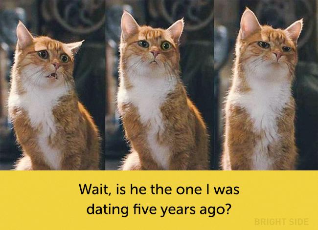 wpid wp 1458419210305 - Siapa Bilang Kucing Tidak Bisa Berekspresi seperti Manusia