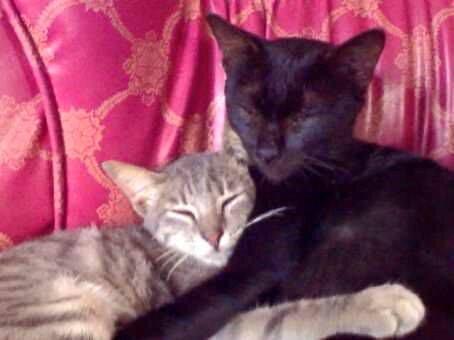 cara merawat kucing tua - Cara Merawat Kucing Di Usianya yang Tidak Lagi Muda
