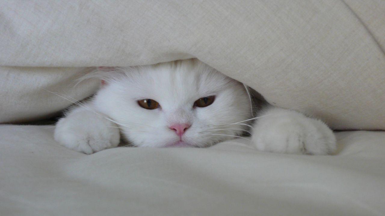 alasan 1 : mencari kehangatan. Kucing bersembunyi untuk mencari kehangatan.