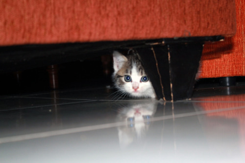 wp 1459539608434 - Alasan Kucing Senang Bersembunyi