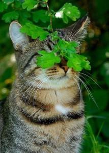 Alasan 4: Ternyata Kucingnya Malu- malu Kucing... hihi