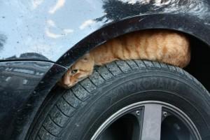 wp 1459539809786 300x200 - Alasan Kucing Senang Bersembunyi