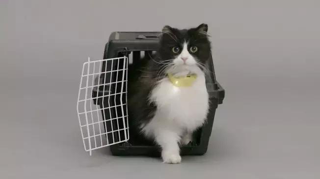 catterbox - Catterbox, Alat Ajaib Penerjemah Suara Kucing