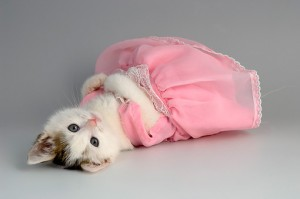 gaunkucing 300x199 - Aksesoris Yang Bisa Bikin Kucing Kamu Jadi Lebih Menggemaskan