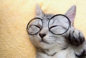 kacamatakucing 300x201 - Aksesoris Yang Bisa Bikin Kucing Kamu Jadi Lebih Menggemaskan