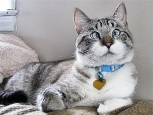 kalung 300x225 - Aksesoris Yang Bisa Bikin Kucing Kamu Jadi Lebih Menggemaskan