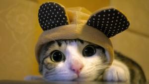 kucinglucu 300x169 - Aksesoris Yang Bisa Bikin Kucing Kamu Jadi Lebih Menggemaskan