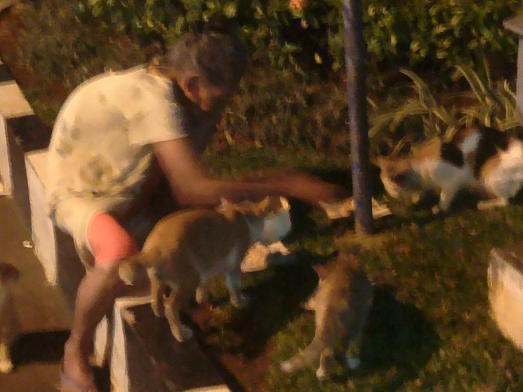 nenek sedang memberi makan kucing