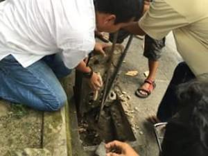 ipenyelamatan seekor kucing yang terjepit di selokan oleh seorang guru dan tim BNPB