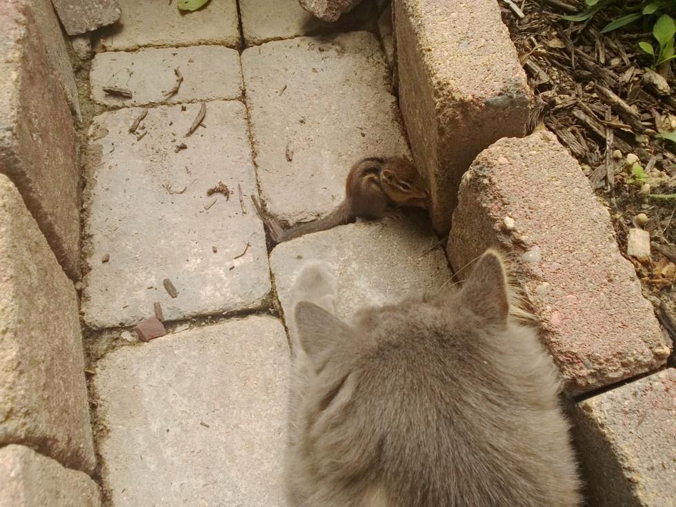 chipmunk - Indahnya Persahabatan 2 Makhluk Berbeda