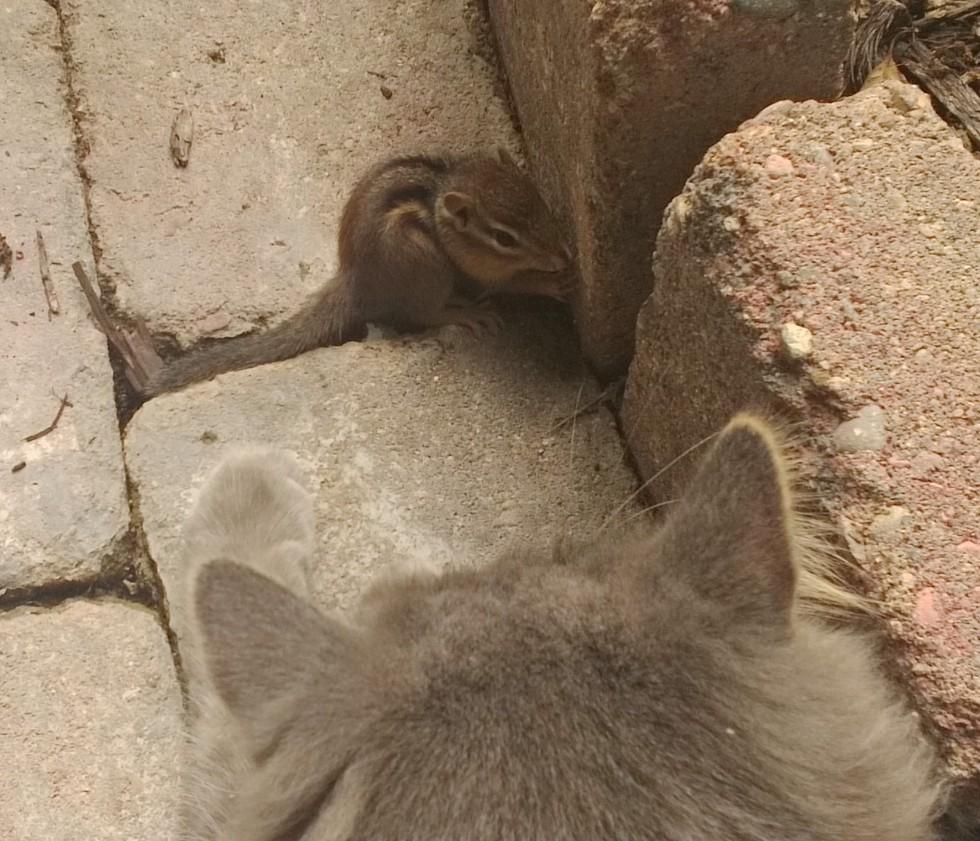 chipmunk2 - Indahnya Persahabatan 2 Makhluk Berbeda