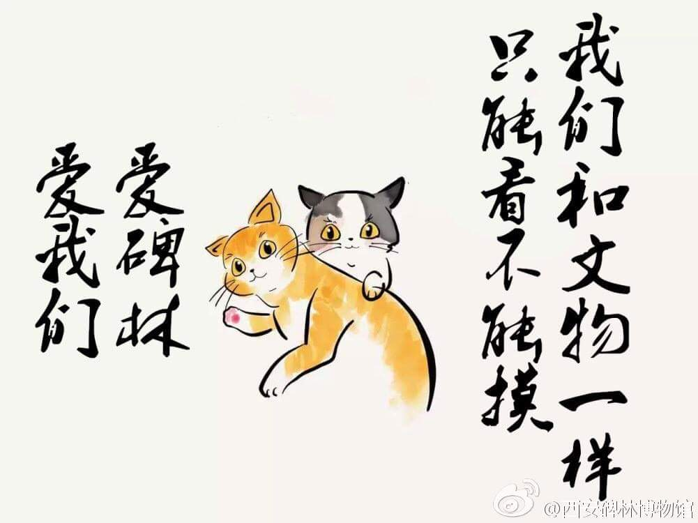 13735084 1283561251684692 168910651614618375 o - Sempat Akan Diusir, Sekelompok Kucing Liar Museum China Berhasil Diselamatkan para Netizen