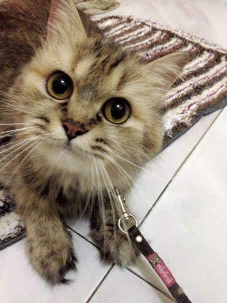 20160702113218 - Benarkah Kucing dapat Mendeteksi Keberadaan Makhluk Halus ?