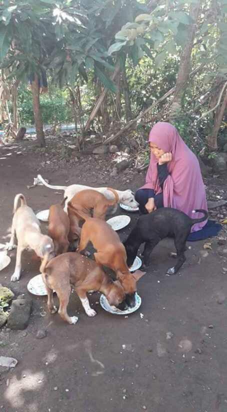 aunty desy memberi makan anjingnya.jpg - Desy Marlina Amin, 'Bidadari'  Kucing dan Anjing Liar di Nusa Tenggara Barat