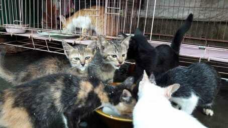 aunty desy memberi makan kucingnya.jpg - Desy Marlina Amin, 'Bidadari'  Kucing dan Anjing Liar di Nusa Tenggara Barat