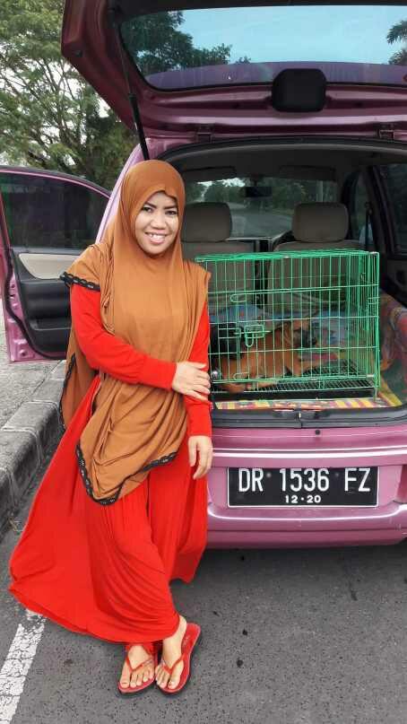 aunty desy steril anjingnya .jpg - Desy Marlina Amin, 'Bidadari'  Kucing dan Anjing Liar di Nusa Tenggara Barat