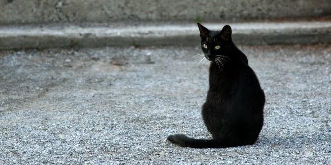 black cat.jpg - Benarkah Kucing dapat Mendeteksi Keberadaan Makhluk Halus ?