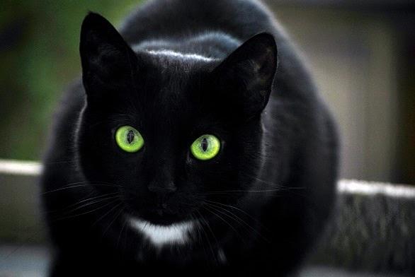 wp 1468496095774 - Benarkah Kucing dapat Mendeteksi Keberadaan Makhluk Halus ?