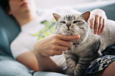 wp 1468676785610 - Kucing Makhluk yang Egois. Benar atau Tidak?
