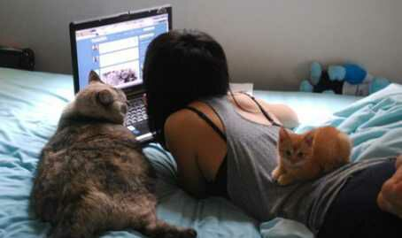 Bagi cat lovers, kucing lebih dari sekedar peliharaan.
