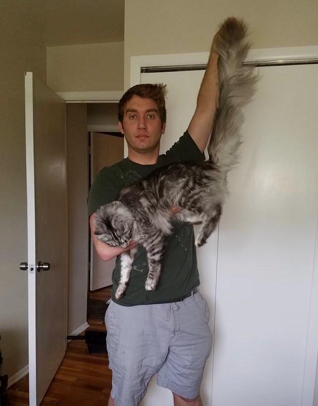 wp 1468988537571 - Cygnus, Kucing dengan Ekor Terpanjang di Dunia