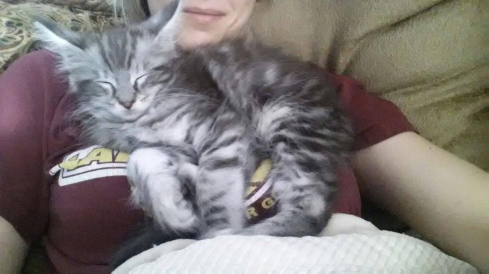 wp 1468990710845 - Cygnus, Kucing dengan Ekor Terpanjang di Dunia