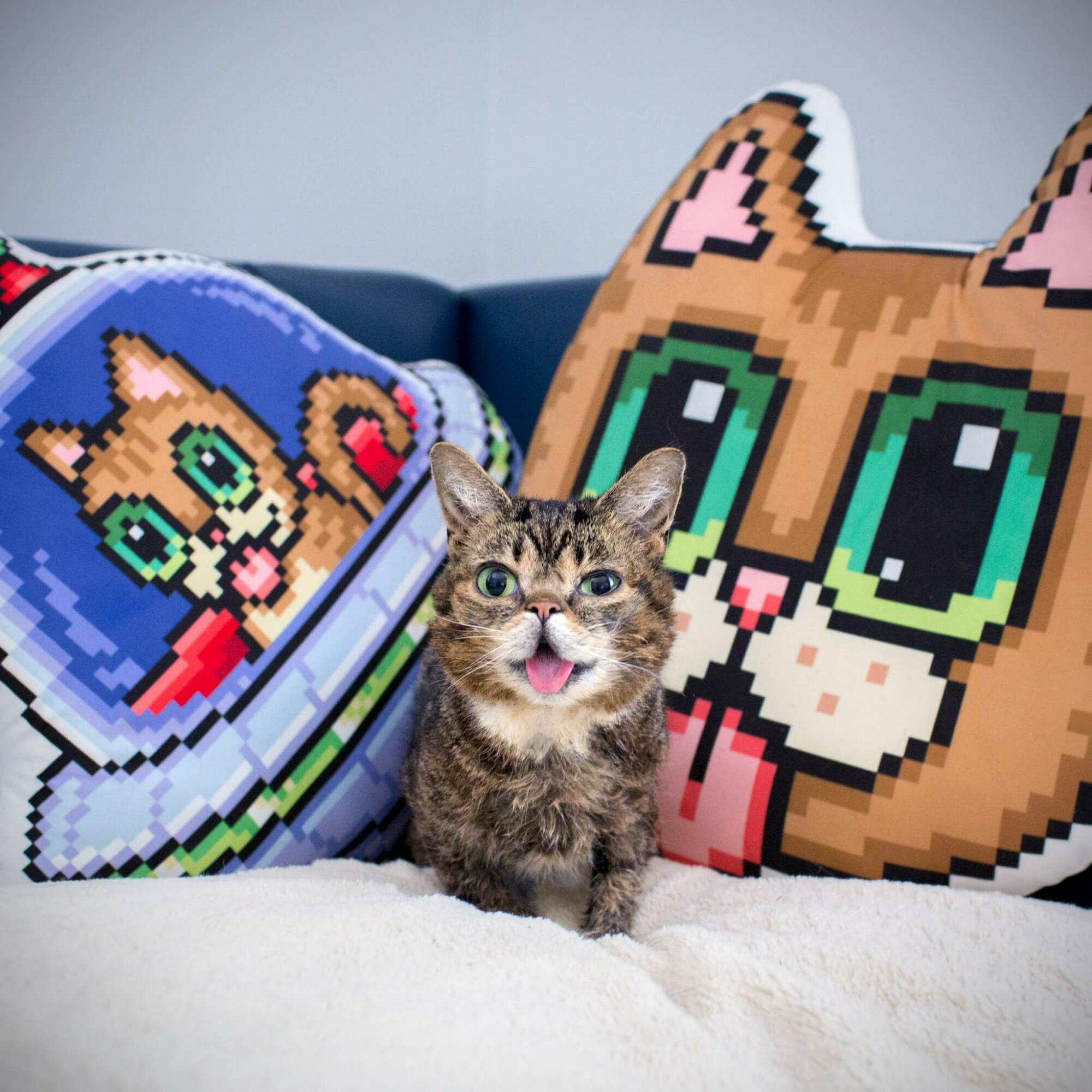 wp 1469200143284 - Imutnya Lil Bub, Kucing Mutan yang Menggemaskan