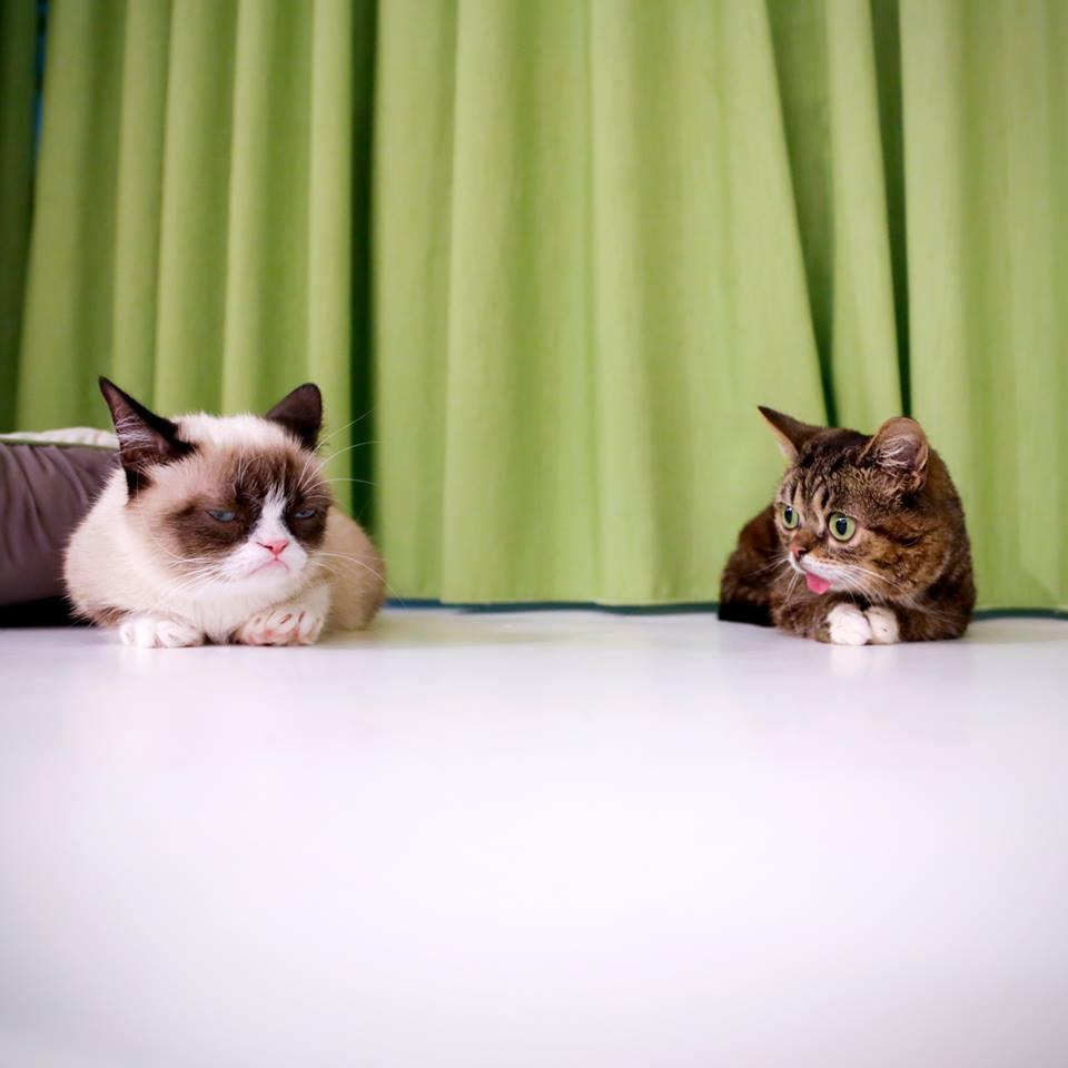 wp 1469201006597 - Imutnya Lil Bub, Kucing Mutan yang Menggemaskan