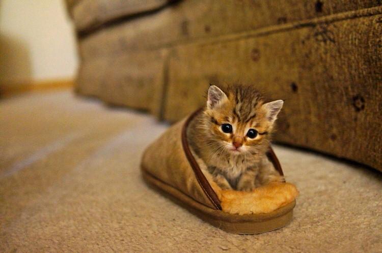 Little sunny, kucing yang selalu berlari ketika pemiliknya bernyanyi. Gambar: top13.net