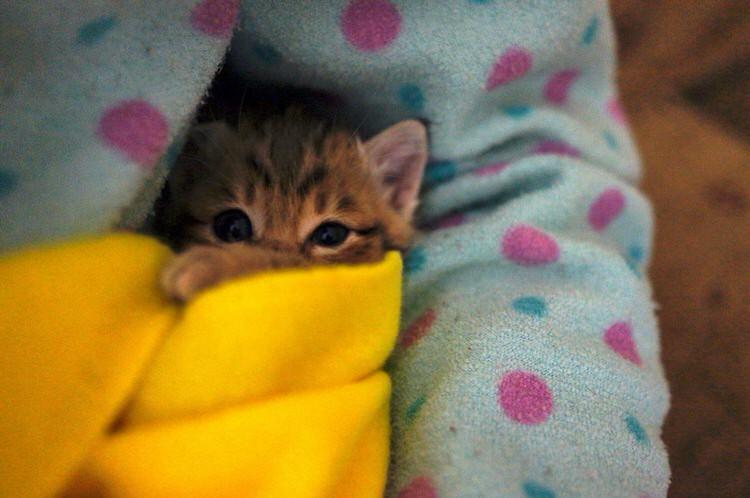 wp 1469331835901 - Kucing ini Selalu Berlari Menghampiri Pemiliknya Ketika Pemiliknya Bernyanyi
