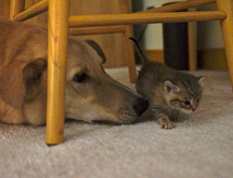 wp 1469332657183 - Kucing ini Selalu Berlari Menghampiri Pemiliknya Ketika Pemiliknya Bernyanyi