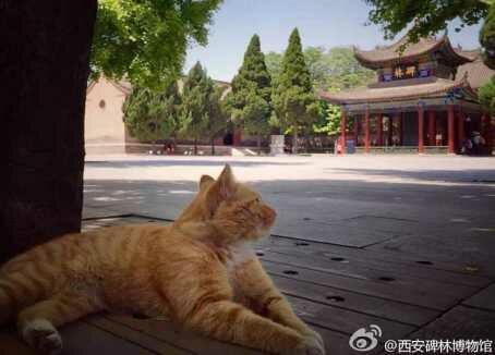 wp 1469708921191 - Sempat Akan Diusir, Sekelompok Kucing Liar Museum China Berhasil Diselamatkan para Netizen