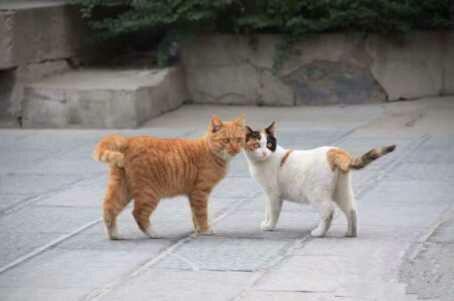 kucing penunggu museum xi'an