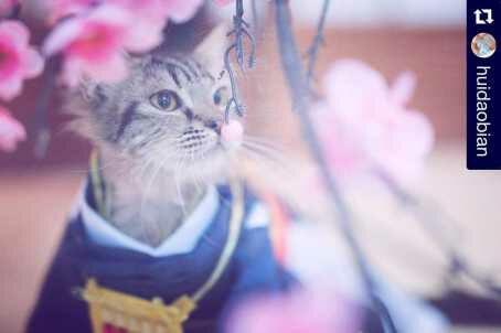 Cosplay Mikazuki, Touken Ranbu. Gambar: tumblr.com