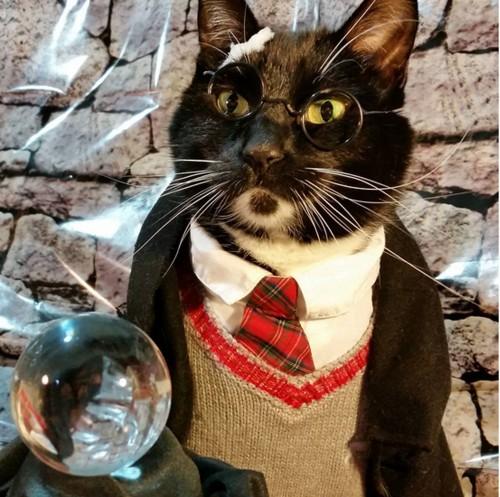 Cosplay Harry Potter. Gambar: japanwsestation.com