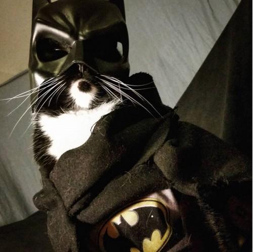 Cosplay Bat Man. Gambar: japanesestation.com